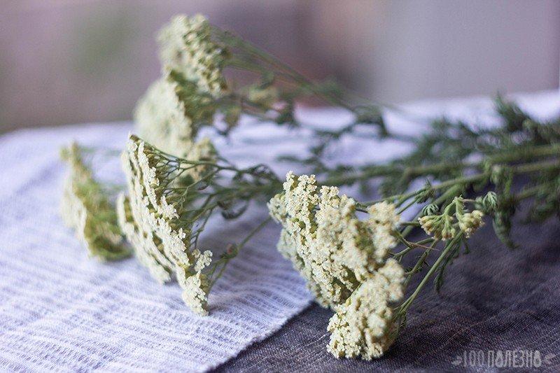 Тысячелистник: сушеные стебли с цветами