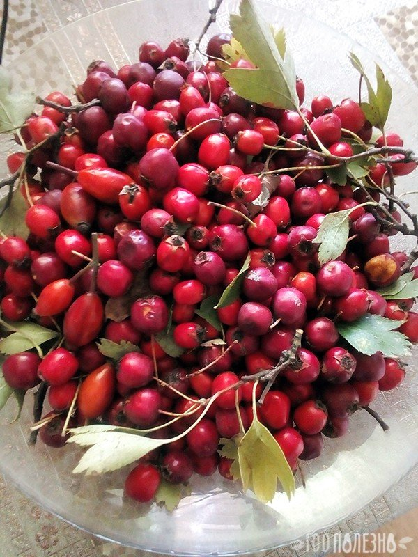 Боярышник : плоды