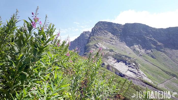 Горы где нет аллергии на амброзию