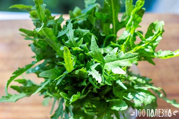руккола фото растения