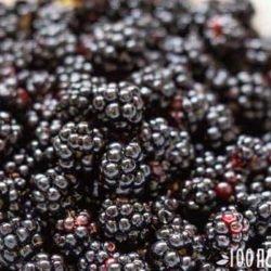 Ежевика: польза целебной ягоды и ее сила