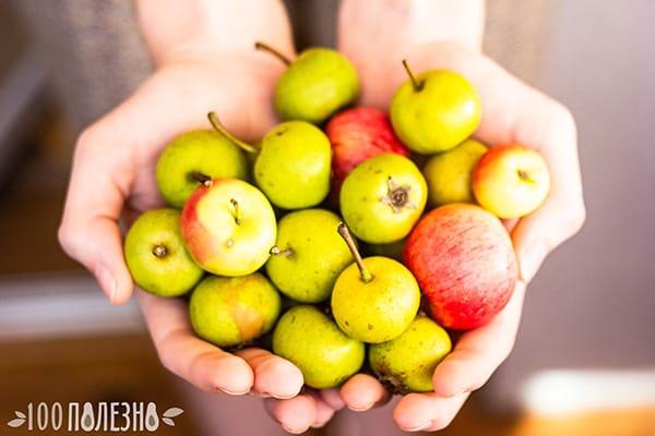 Дикие яблоки из леса