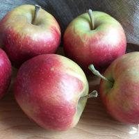 Польза яблок для организма человека — где правда, а где вымысел?