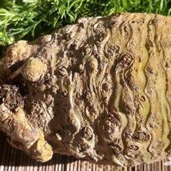 Корневой сельдерей: как его едят и чем он полезен – состав, свойства, особенности