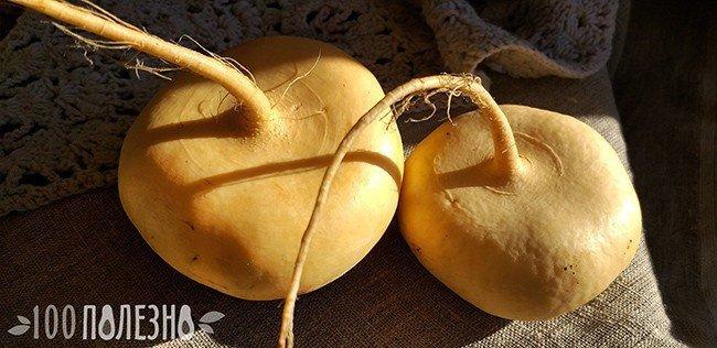корнеплоды репы