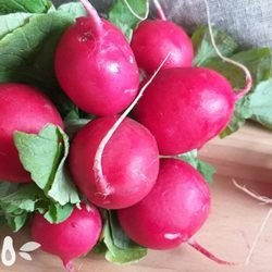 Редис: польза весеннего овоща