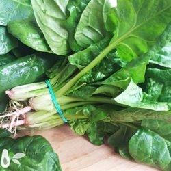 Шпинат: польза и вред, рецепты приготовления вкусных блюд из свежей зелени