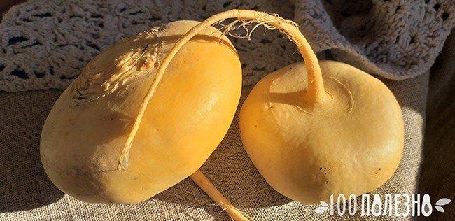корнеплод репы