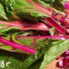 Все про мангольд: что это за растение, как его едят, и какая от него польза?