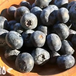 Голубика: польза, вред, состав и целебная сила синей ягодки