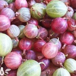 Крыжовник: чем полезен «северный виноград»?