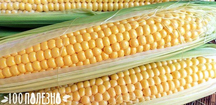 свежая молодая кукуруза в початках