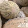 Как выбрать дыню торпеду спелую и сладкую, как ее есть, и чем она полезна?