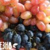Виноград: польза и вред для организма женщины южной ягоды