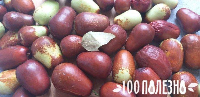 зизифус крымский фото ягод