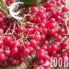 Калина: полезные свойства и противопоказания, целебная сила ягод и коры растения
