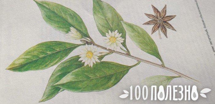фото страницы из книги с веткой цветущего бадьяна