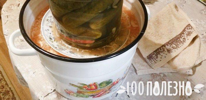 капуста квашеная в процессе ферментации
