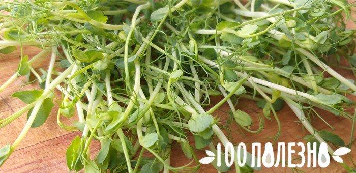 микрогрин зеленого горошка