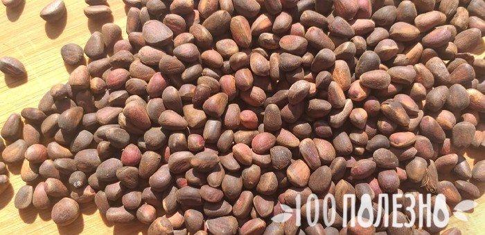 семена сибирской сосны
