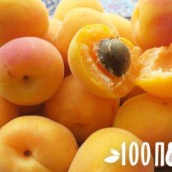 Все про абрикосы: чем полезны, состав, целебные свойства плодов и ядрышек
